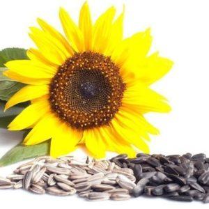 Подсолнечник семена